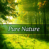 Pure Nature – Pure Nature Sounds for Relax, Meditation, Sleep, Relaxing Music, Spa, Wellness by Nature Sound Series