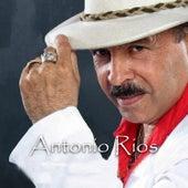 Nunca Me Faltes (En Vivo) de Antonio Rios