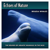 Beluga Whales by Echoes of Nature