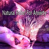 Natural Relief For Anxiety by Deep Sleep Music Academy