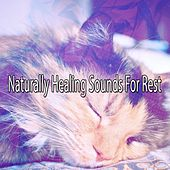 Naturally Healing Sounds For Rest de White Noise Babies