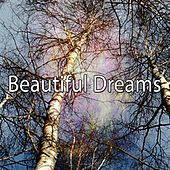 Beautiful Dreams de White Noise Babies