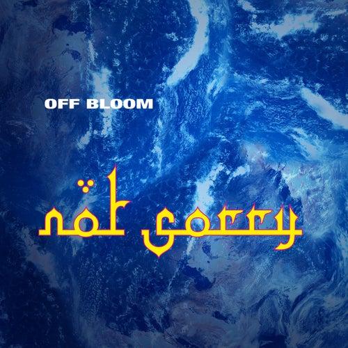 Not Sorry von Off Bloom