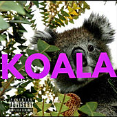Koala von A Camp