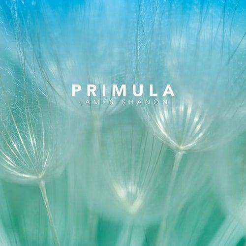 Primula by James Shanon