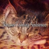 Natures Calming Ambience de Smart Baby Lullaby