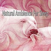 Natural Ambience For Sleep by Ocean Sounds Collection (1)