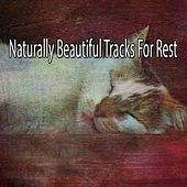 Naturally Beautiful Tracks For Rest de Sounds Of Nature