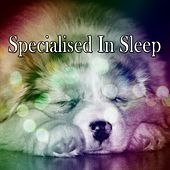 Specialised In Sleep von Rockabye Lullaby