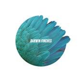 Darwin Finches de Darwin Finches