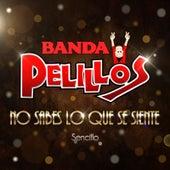 No Sabes Lo Que Se Siente by Banda Pelillos
