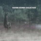 Nature Sounds Collection by Various Artists