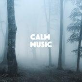 Calm Music de Various Artists