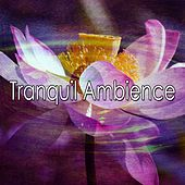 Tranquil Ambience de Meditación Música Ambiente
