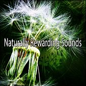 Naturally Rewarding Sounds de Nature Sounds Artists