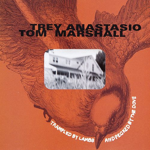 Trampled by Lambs and Pecked by the Dove de Trey Anastasio