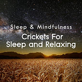 Crickets for Sleep and Relaxing (Sleep & Mindfulness) by Sleepy Times