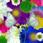 나비 Butterfly by Pig