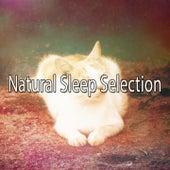 Natural Sleep Selection de Sounds Of Nature