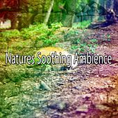 Natures Soothing Ambience by Nature Sound Series