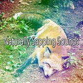 Naturally Sapping Sounds de Water Sound Natural White Noise