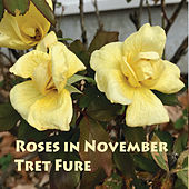 Roses in November by Tret Fure