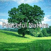 Peaceful Nature von Lullabies for Deep Meditation