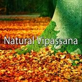Natural Vipassana de Zen Meditation and Natural White Noise and New Age Deep Massage