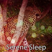 Serene Sleep by Lullaby Land