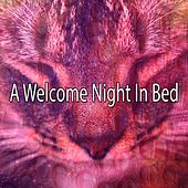 A Welcome Night In Bed de White Noise Babies