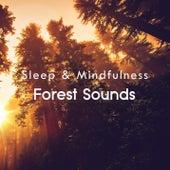 Forest Sounds (Sleep & Mindfulness) von Sleepy Times