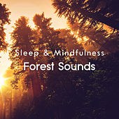 Forest Sounds (Sleep & Mindfulness) by Sleepy Times