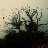 Shadowbird de The Ambient Light