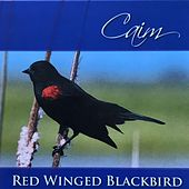 Red Winged Blackbird by CAIM