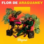 Flor de Araguaney de Bitoqueao
