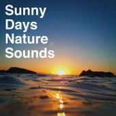 Sunny Days Nature Sounds de Various Artists