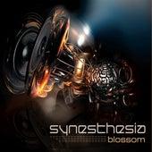 Blossom by Synesthesia