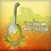 Bluegrass Spectacular von Various Artists