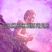 53 Tracks Select Sounds For Peace de Zen Meditation and Natural White Noise and New Age Deep Massage