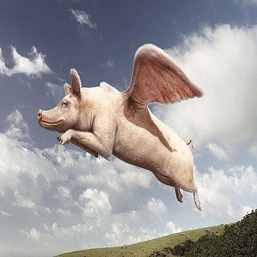 Pigs Fly by Gmakin