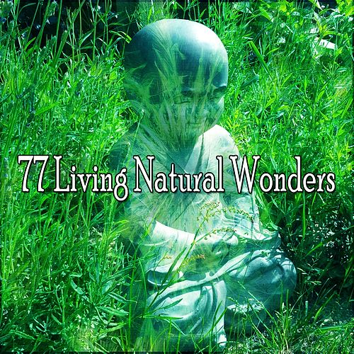77 Living Natural Wonders de Yoga Music