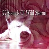 22 Sounds Of Wild Storms de Thunderstorm Sleep