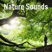 Nature Sounds by Relaxing Sounds