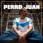 Perro Juan von Luis 7 Lunes