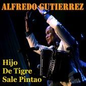 Hijo de Tigre Sale Pintao de Alfredo Gutierrez