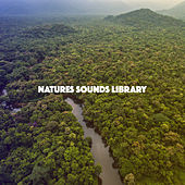 Natures Sounds Library by Various Artists