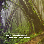 Noises from Nature to Help You Fall Asleep by Various Artists