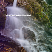 Relaxing Nature Sounds de Various Artists