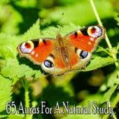65 Auras For A Natural Study von Massage Therapy Music