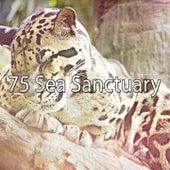 75 Sea Sanctuary de Smart Baby Lullaby